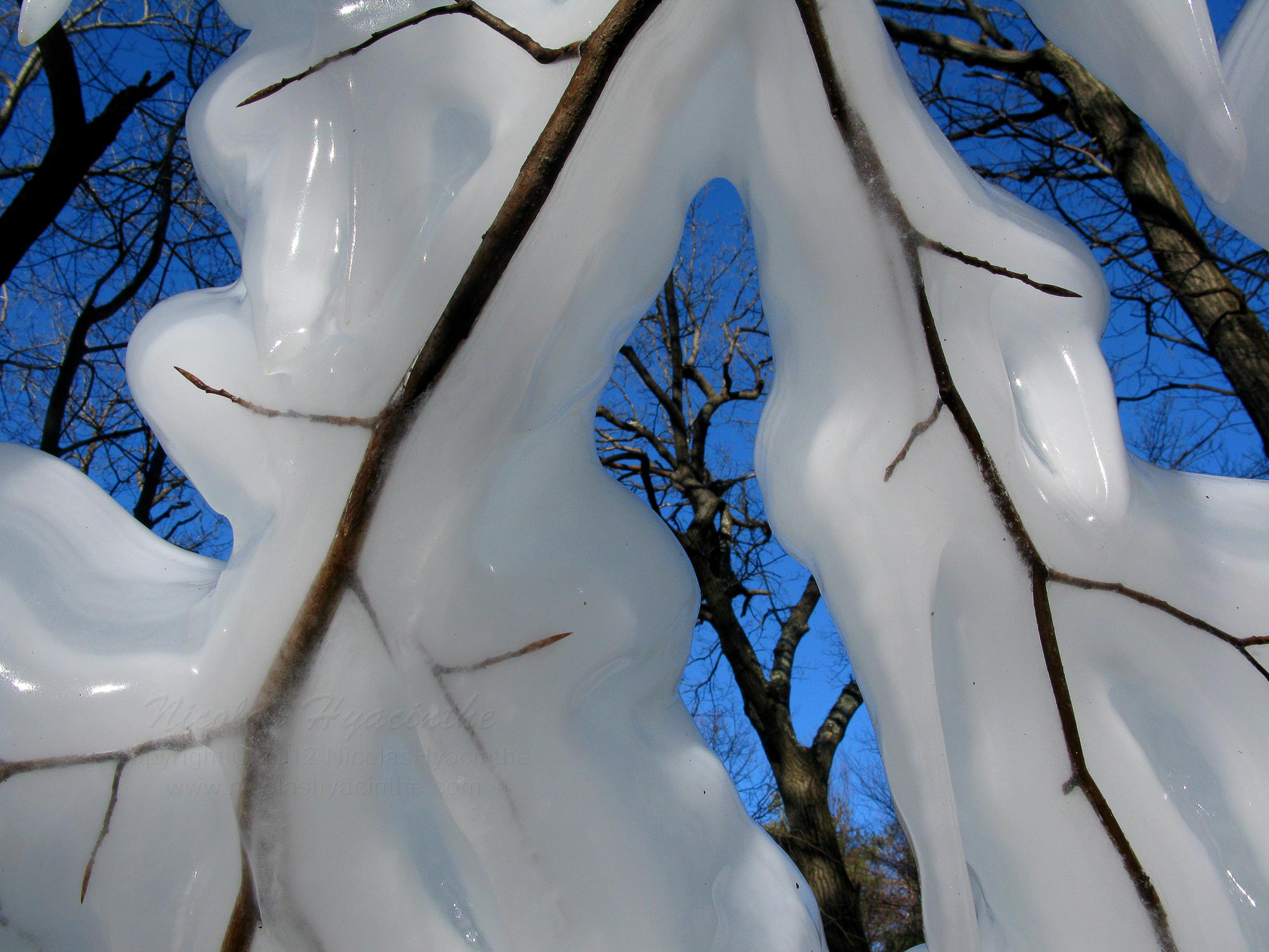 ice & trees