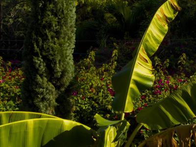 delmas garden by nicolas hyacinthe