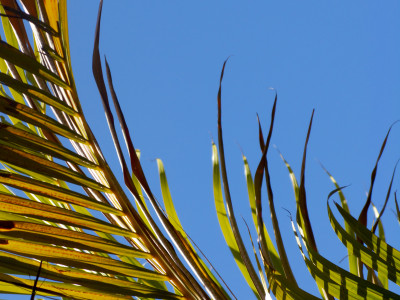 palm sky by nicolas hyacinthe